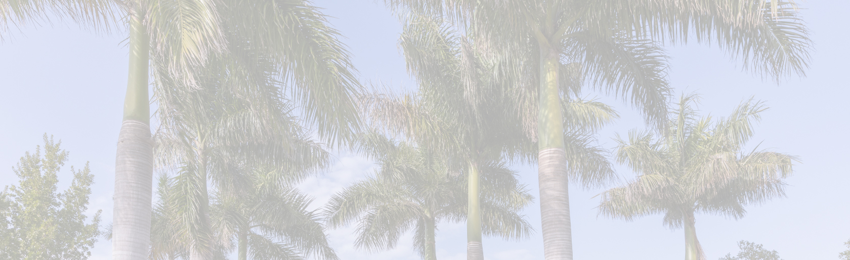 background photo of palm trees for header