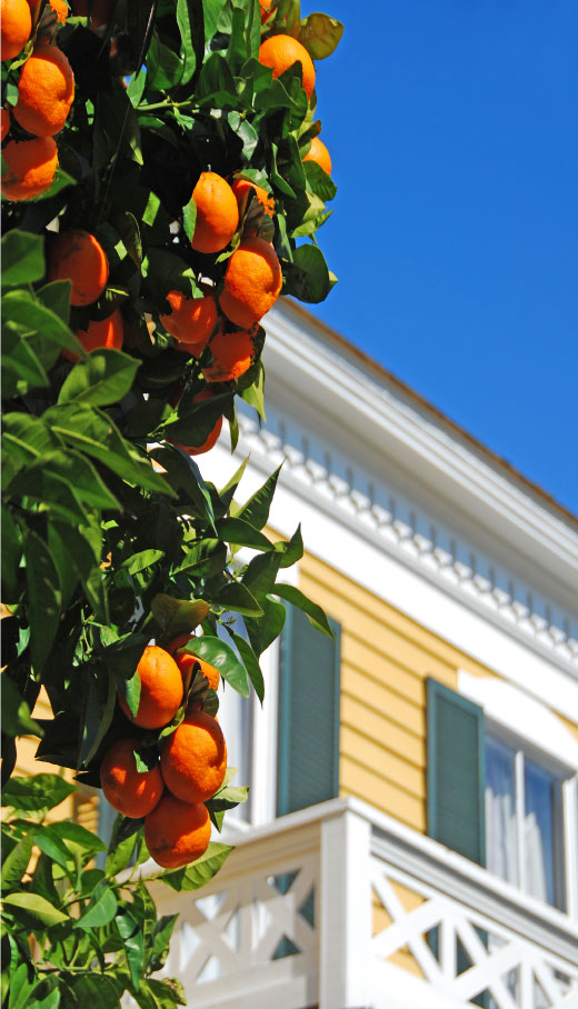 Florida State Tentless Termite Treatments photo of orange tree and house