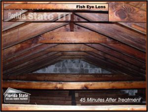 Attic Roof Trusses After Termite Treatment