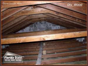 Attic Roof Trusses before Termite Treatment